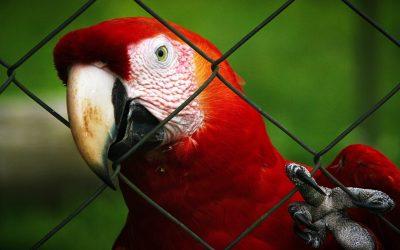International Wildlife Crime Webinar