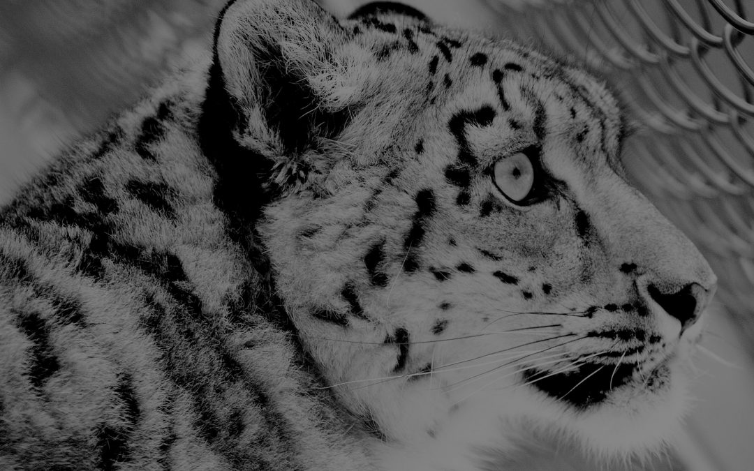 Global Snow Leopard and Ecosystem Protection Program Steering Committee Meeting